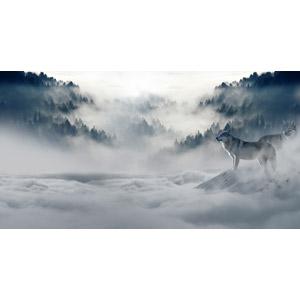 フリー写真, フォトレタッチ, 動物, 哺乳類, 狼(オオカミ), 山, 霧(霞), 雲, 雲海