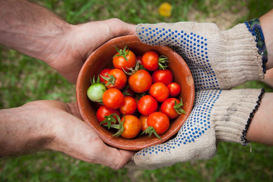 フリー写真 ミニトマトを手渡す手