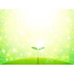 フリーイラスト, 植物, 新芽, 光(ライト), 水滴(雫), 緑色(グリーン), エコロジー, 輝き