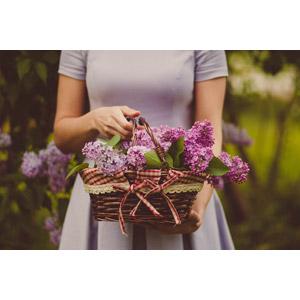 フリー写真, 人物, 女性, 人と花, 植物, 花, 籠(バスケット), 花摘み