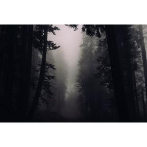 フリー写真, 風景, 自然, 森林, 樹木, 霧(霞)