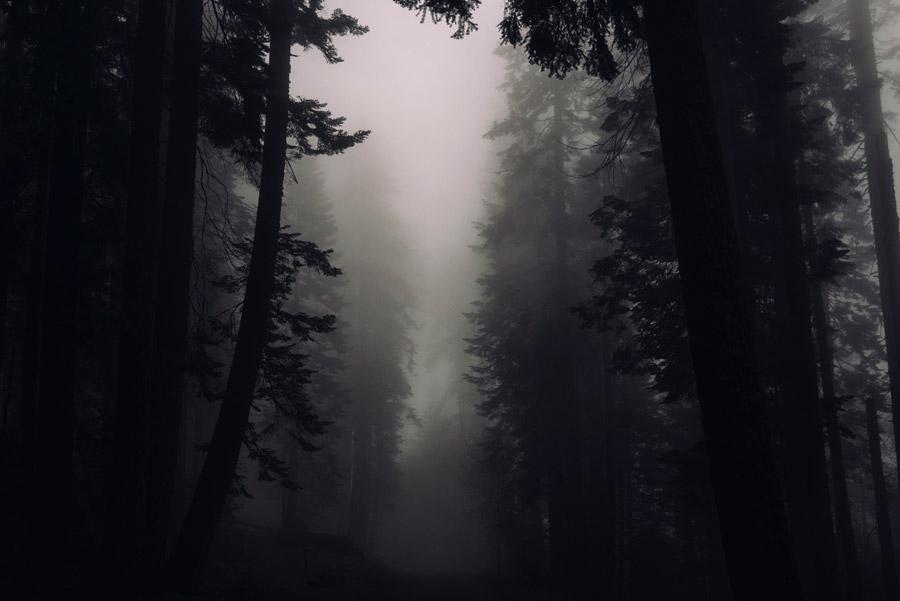 フリー写真 霧に包まれた森の木々
