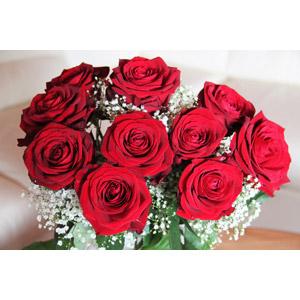フリー写真, 植物, 花, 薔薇(バラ), 赤色の花