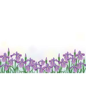 フリーイラスト, ベクター画像, AI, 植物, 花, アヤメ(ハナショウブ), 紫色の花
