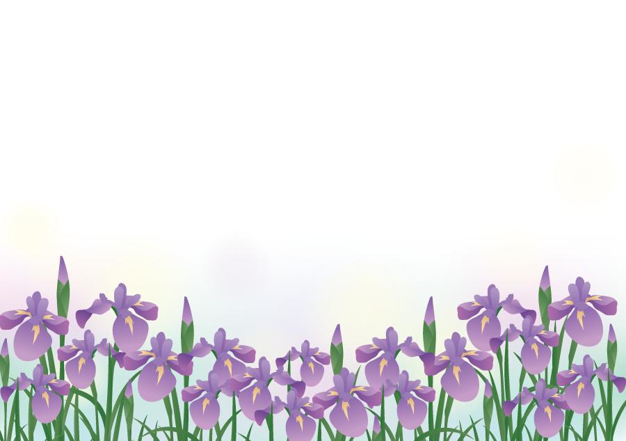 フリーイラスト 紫色の菖蒲の花の背景