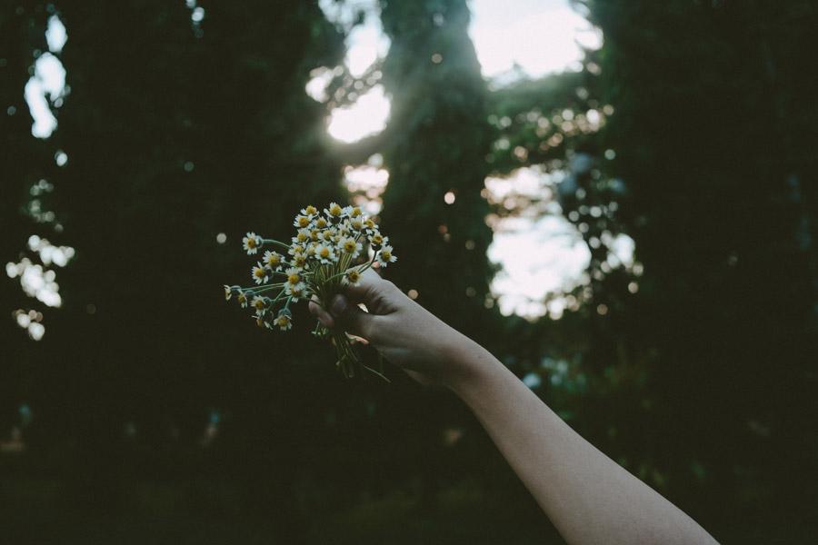 フリー写真 摘んだ白い花を持ち上げる手