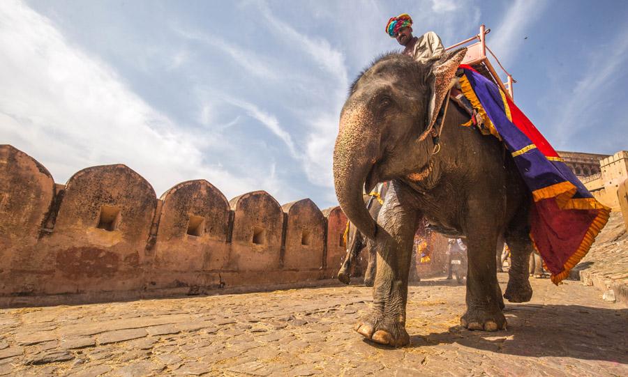 フリー写真 アンベール城の象タクシー