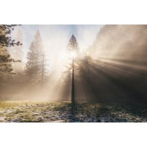 フリー写真, 風景, 自然, 樹木, 太陽光(日光), 薄明光線, 霧(霞)