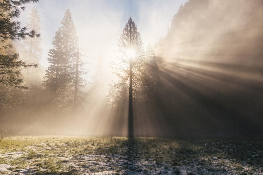 フリー写真 霧と木と太陽の光の風景