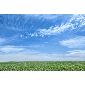 フリー写真, 風景, 自然, 空, 青空, 草原, 日本の風景, 北海道