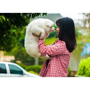 フリー写真, 人物, 女性, アジア人女性, 人と動物, 動物, 哺乳類, 犬(イヌ), 子犬, 子供(動物), サモエド