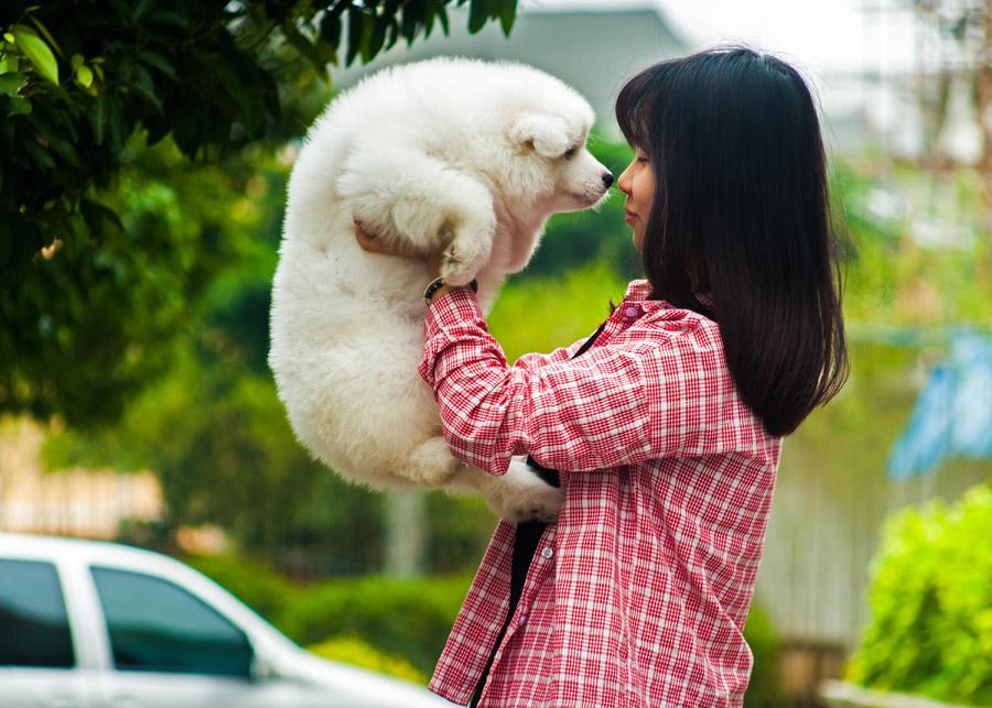 フリー写真 サモエドの子犬を抱き上げる女性