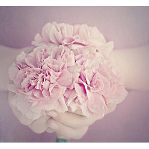 フリー写真, 植物, 花, カーネーション, ピンク色の花, 人体, 手, 年中行事, 5月, 母の日