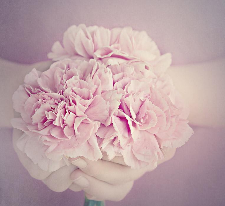 フリー写真 ピンク色のカーネーションを持つ手