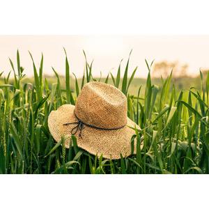 フリー写真, 風景, 畑, 作物, 穀物, 麦(ムギ), 麦わら帽子, 帽子