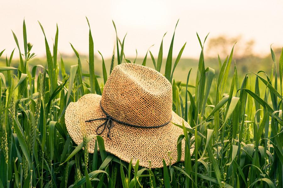 フリー写真 麦畑と麦わら帽子