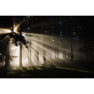 フリー写真, 風景, 樹木, 木漏れ日, 太陽光(日光)