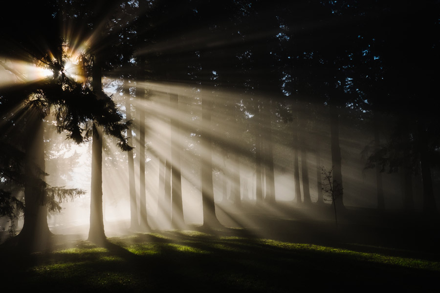 フリー写真 木々と太陽光線の風景