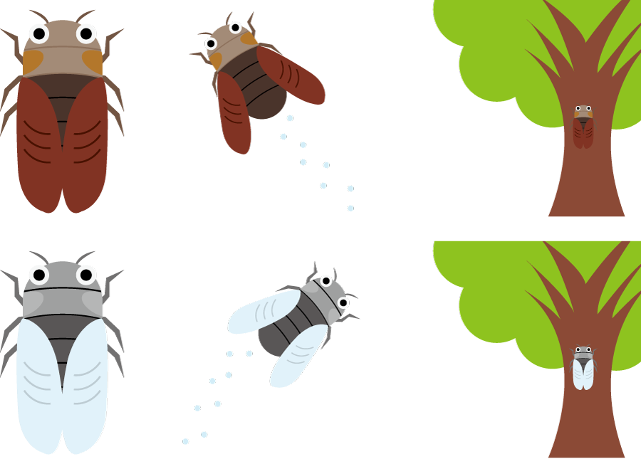 フリーイラスト 6種類のセミのセット