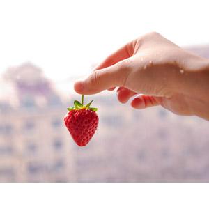 フリー写真, 人体, 手, 食べ物(食料), 果物(フルーツ), 苺(イチゴ)