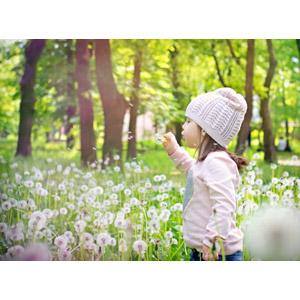 フリー写真, 人物, 子供, 女の子, 外国の女の子, ニット帽, 横顔, 蒲公英(タンポポ), 植物, 綿毛, 息を吹く