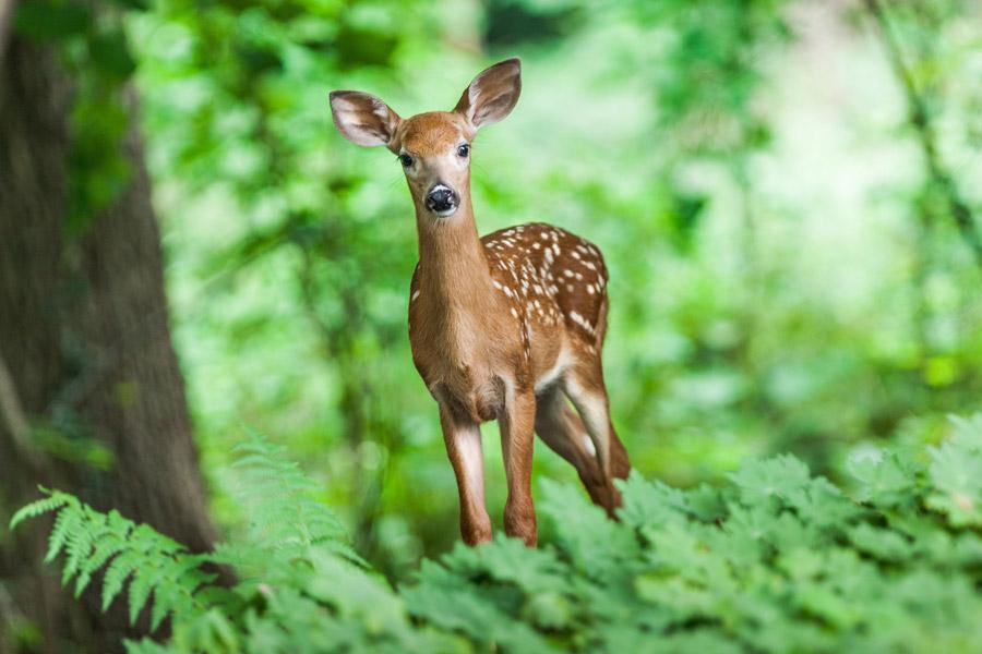 フリー写真 森の中にいる子鹿