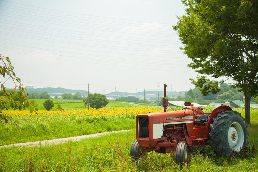 フリー写真 放置されたトラクターとひまわり畑