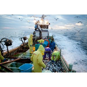 フリー写真, 仕事, 職業, 漁師, 漁, 乗り物, 人と乗り物, 船, 漁船, 鴎(カモメ), 海