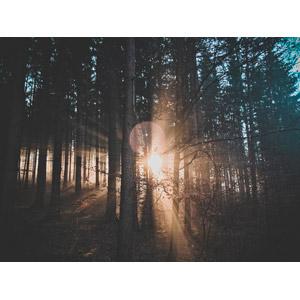フリー写真, 風景, 自然, 森林, 樹木, 木漏れ日, 太陽光(日光), 朝日, 朝