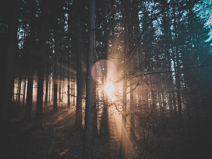 フリー写真 森の木々と射し込む朝日