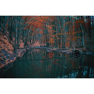 フリー写真, 風景, 自然, 森林, 河川, 紅葉(黄葉), 倒木, ルーマニアの風景