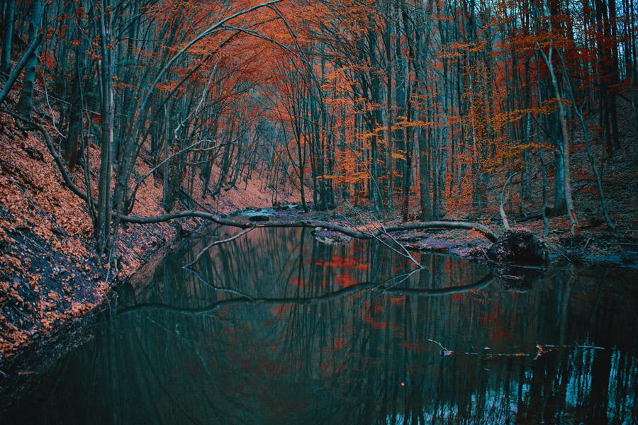 フリー写真 紅葉した森と小川の風景