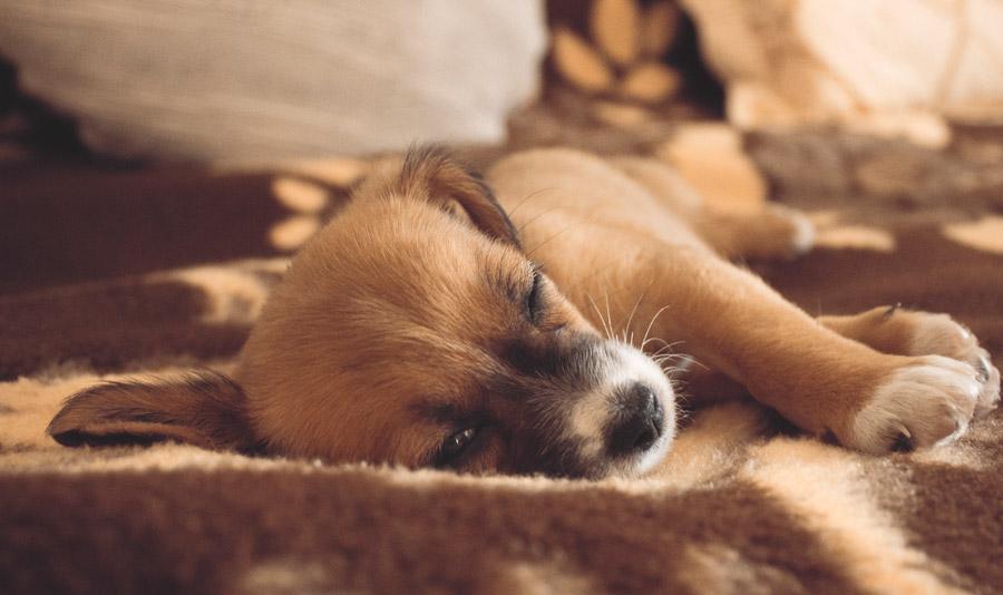 フリー写真 目が覚める子犬