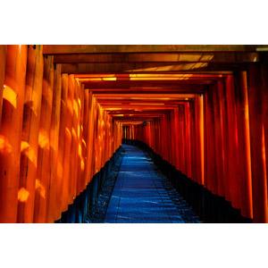 フリー写真, 風景, 建造物, 建築物, 鳥居, 神社, 日本神道, 伏見稲荷大社, 日本の風景, 京都府