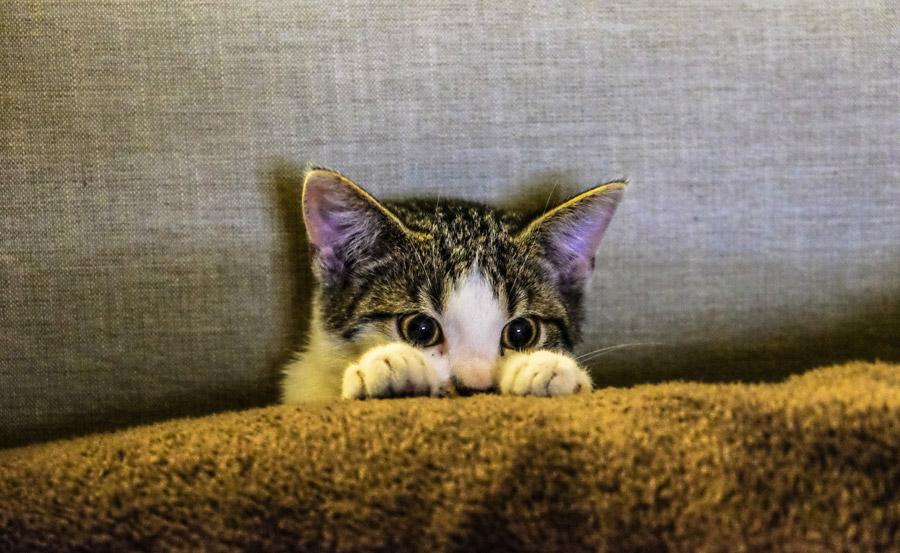 フリー写真 物陰から覗いている子猫