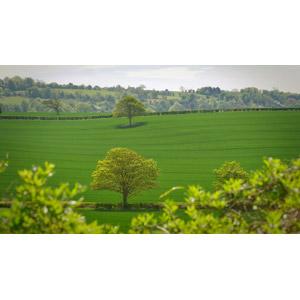 フリー写真, 風景, 牧草地, 田舎, 樹木, イギリスの風景