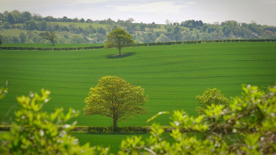 フリー写真 牧草地と木の風景