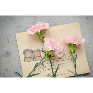 フリー写真, 植物, 花, カーネーション, ピンク色の花, 手紙