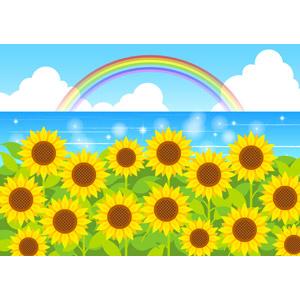 フリーイラスト, ベクター画像, AI, 風景, 植物, 花, 向日葵(ヒマワリ), 黄色の花, 夏, 海, 虹, 花畑