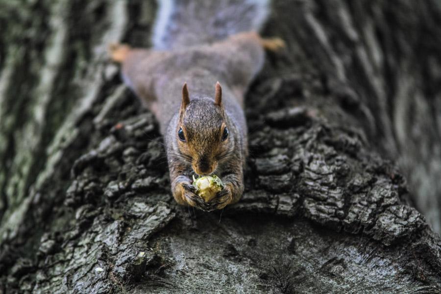 フリー写真 木にぶら下がって木の実を食べているリス