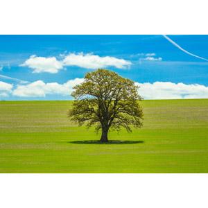 フリー写真, 風景, 青空, 樹木, 牧草地, 雲