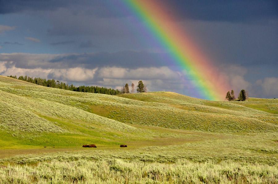 フリー写真 イエローストーン国立公園に架かる虹