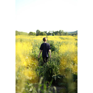 フリー写真, 人物, 子供, 男の子, 外国の男の子, 後ろ姿, 人と風景, 植物, 花, 菜の花(アブラナ), 黄色の花, 春, 花畑