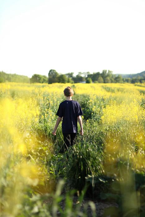 フリー写真 菜の花畑の中の男の後ろ姿