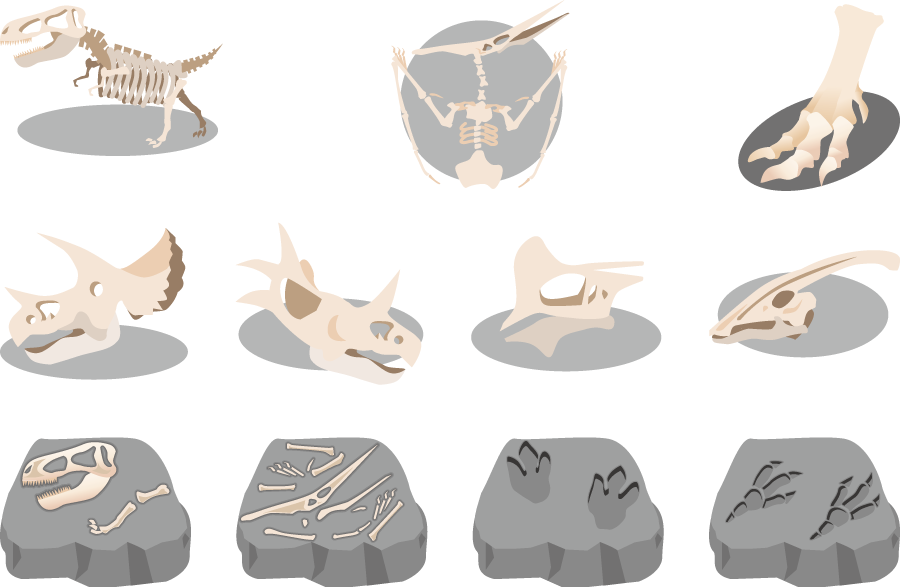 フリーイラスト 11種類の恐竜の骨と化石のセット