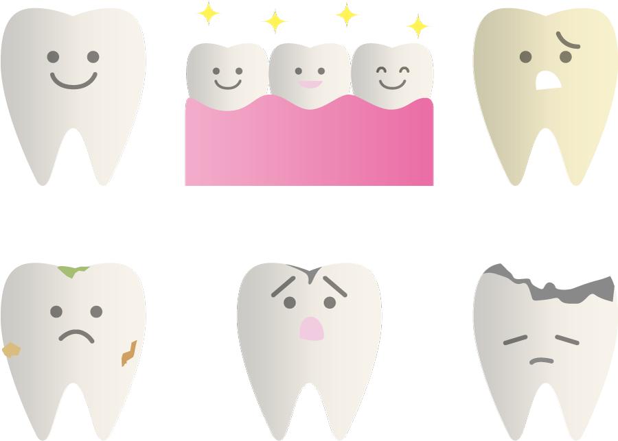 フリーイラスト 6種類の歯のセット