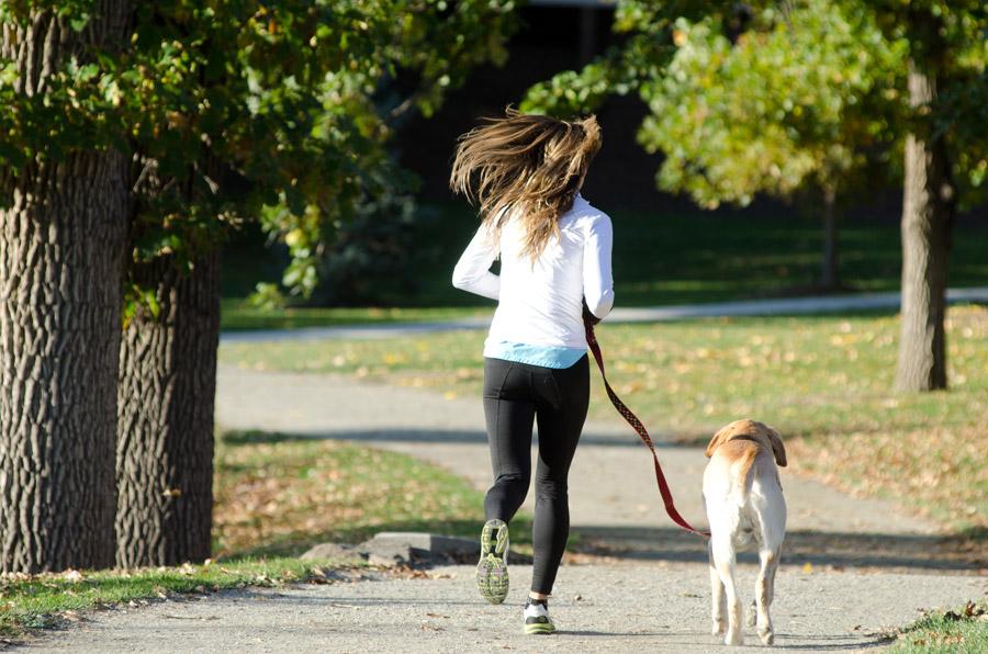 フリー写真 犬と一緒にジョギングしている女性の後ろ姿