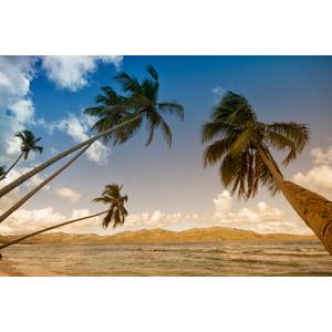 フリー写真, 風景, 自然, 椰子(ヤシ), 海, 南国