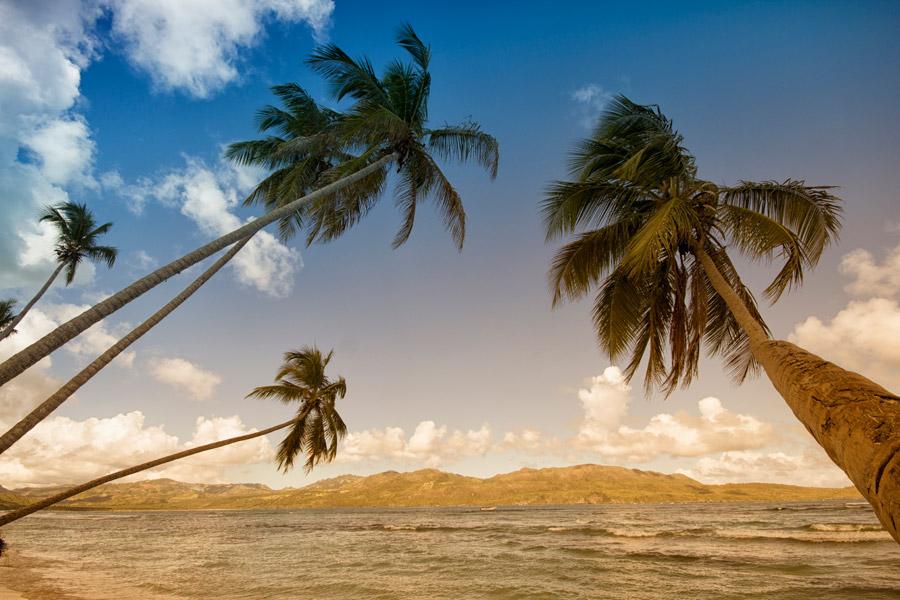 フリー写真 海と傾いたヤシの木