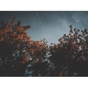 フリー写真, 風景, 樹木, 飛行機雲